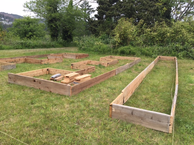 The raised beds are looking good!